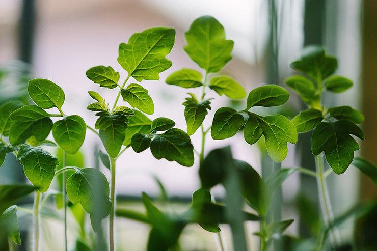 Les jeunes plants