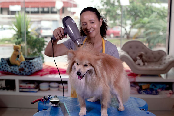 Blow Drying Dog