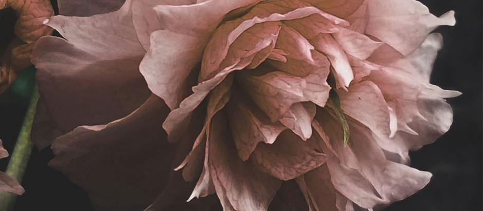 Lyrics: Rose