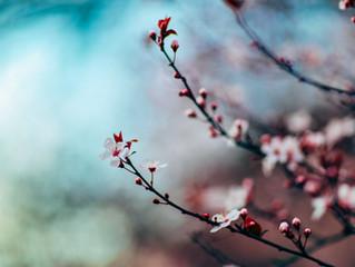 春一番が吹きました。