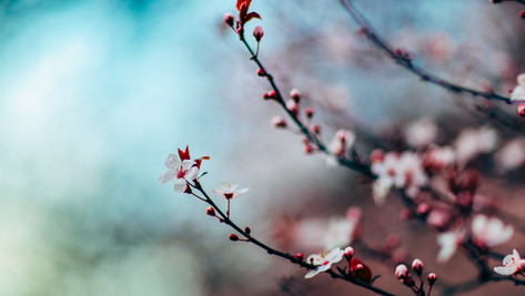 3/11(木)~3/20(土)の営業情報