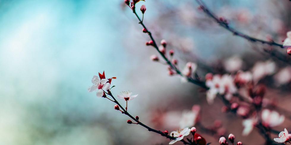 Spring Circle - Thursday Evenings, 6:30-8:30 pm - March 25 thru May 13