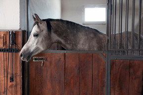 Should I be worried that my horse is overweight?