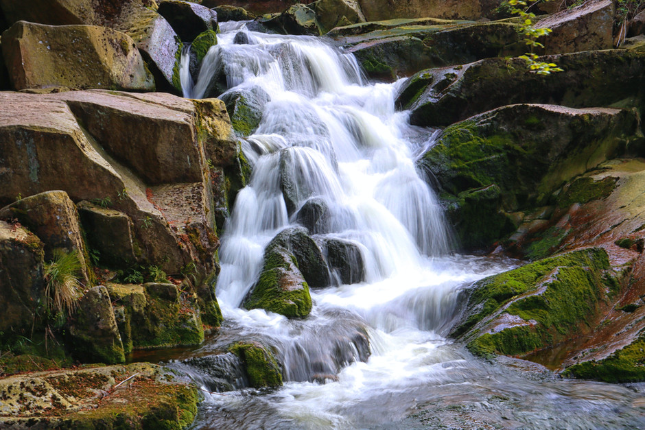 Magic in Nature, Bidwell Park, Chico California