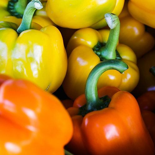 Orange Sweet Pepper Plant