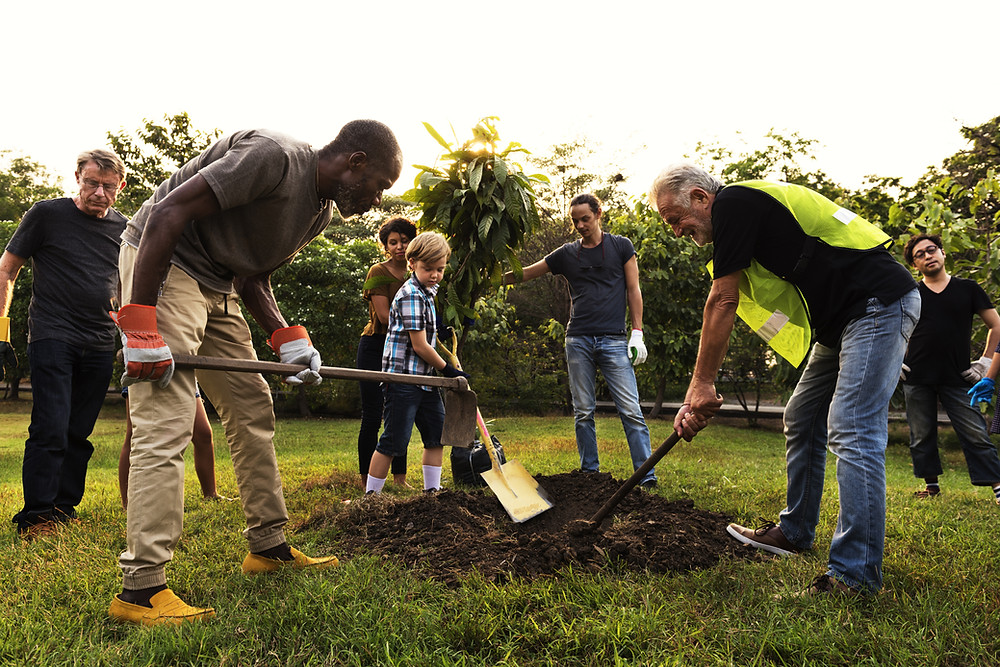 people carbon offset by planting trees