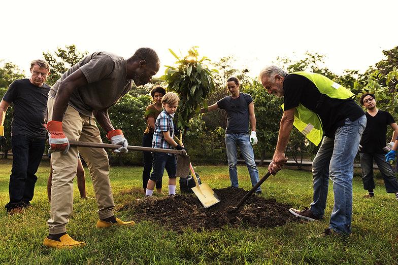 Grupo plantando un árbol