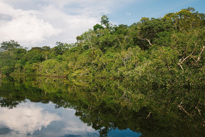 Árvores na água