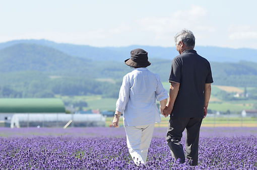 紫色の花畑