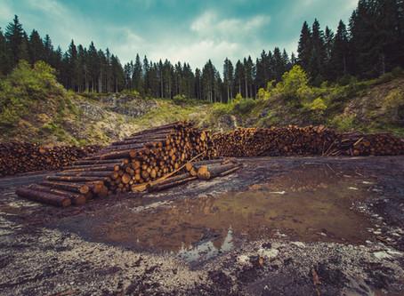 4 eenvoudige manieren om ontbossing in je dagelijks leven te bestrijden