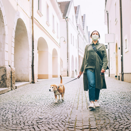 Walking the dog is part of an organized life?