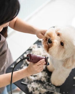 Dog Getting Groomed