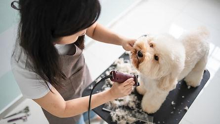 Perro preparándose