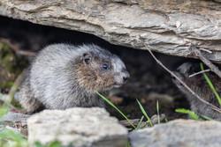 And the Groundhog Says...