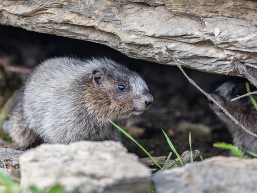 Dead Rats Can Raise GDP, Economists Have Lowered It