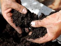 การปฎิบัติการในแปลงเกษตรอินทรีย์โดย ดร.รณวริทธิ์ ปริยฉัตรตระกูล