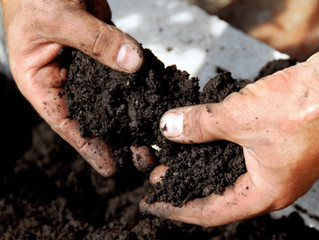 Free Compost Giveaway April 3 (2021)