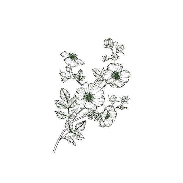 Blume Ast