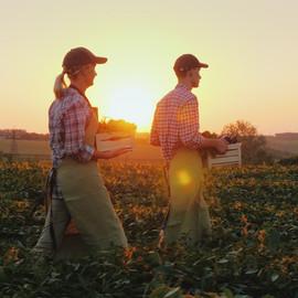 Bitkileri Hasat Çiftçiler