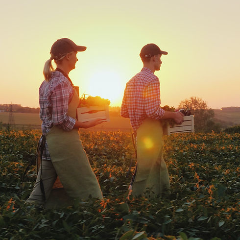 Farmers Harvesting Crops
