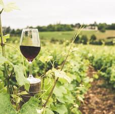 Zoom sur : les groupements fonciers viticoles