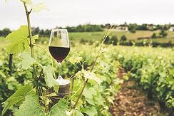 Bardak kırmızı şarap