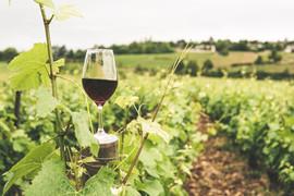 Wine country activities