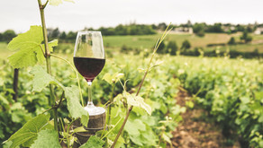 Climate Change Effects Are Felt by the Wine Industry
