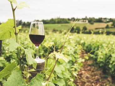 Terroir: A Definition of Wine's Unique Character
