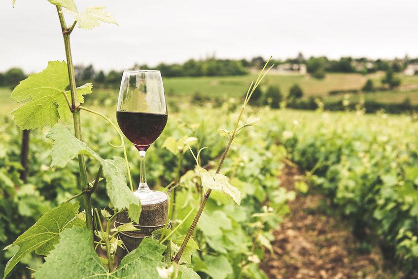 Gamay, Cabernet, Pinot noir, sauvignon, menu pineau