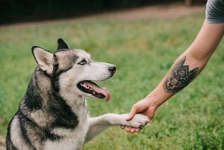 Husky Handshake