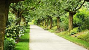 Mental Health: Walk The Green Path