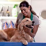 Escovando pelo de cachorro