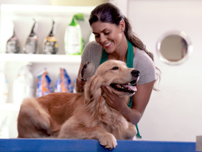 5 Social Media Tips for Dog Groomers