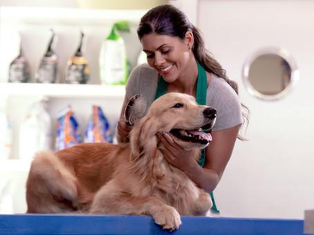 Serviços essenciais para o bem-estar do seu pet