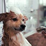 Honden wassen