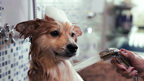 The Top 5 Questions Groomers Get Asked: An Interview with Signal Hill Pet Grooming