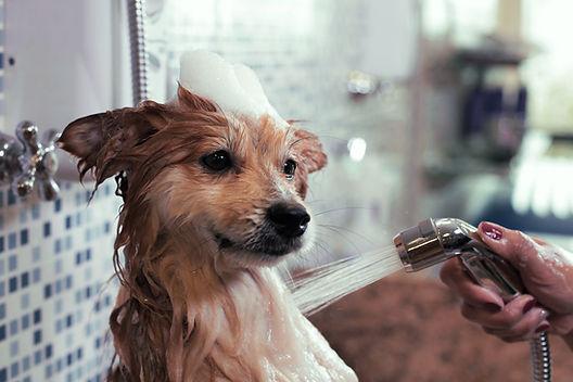 Perro de lavado