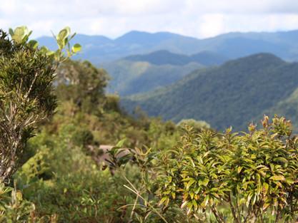 Você sabe como uma vegetação pode influenciar no clima?
