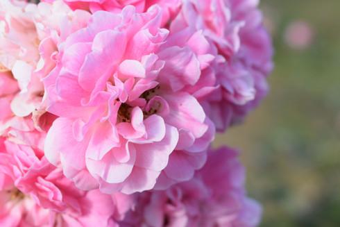 Pink Blossom at Estrella's Flower Shop