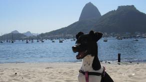 O que fazer com o seu pet em Copacabana