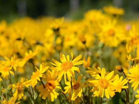 Seasonal Allergies Support - Part One