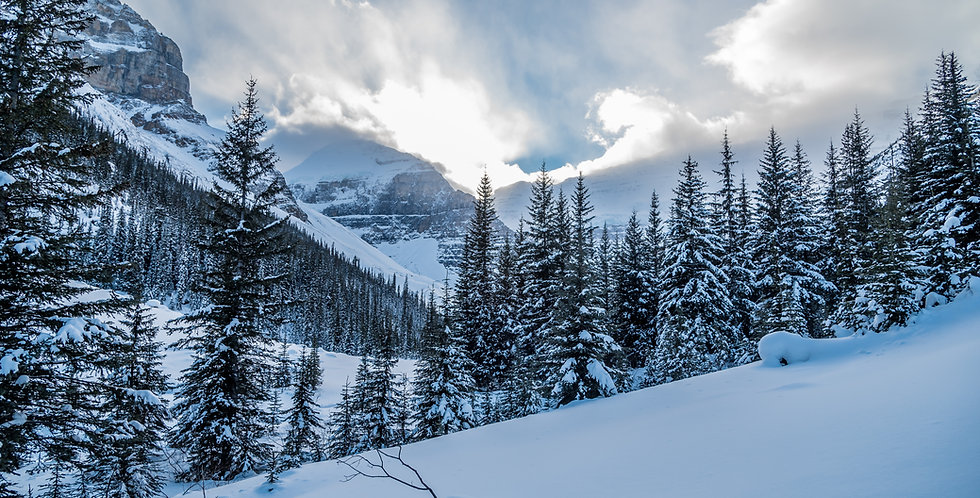 Sweet Snow Wax Melt