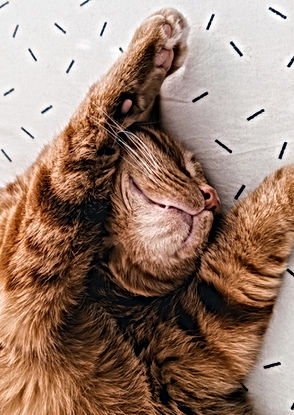 Cat Stretching on Sheets