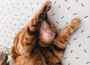 Savez-vous pourquoi votre chat se fait les griffes?