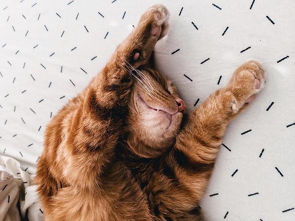 Katze, die auf Blätter ausdehnt