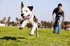 Happy Dog at Dog Park playing