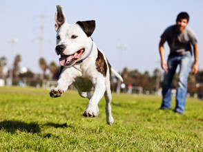 We Love Your Pets! Tips For Bringing Your Dog To A Dog Park