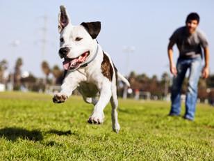 A Katy Family Warns How a Simple Dog Walk Can Lead to Heatstroke