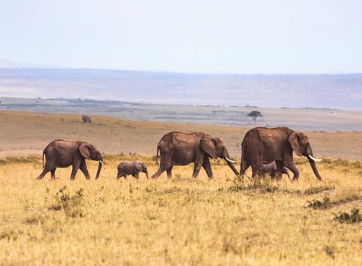 Goda nyheter: Researrangörer slutar marknadsföra elefantattraktioner
